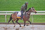October 28, 2015 :   Calamity Kate, trained by Kelly Breen and owned by George & Lori Hall, exercises in preparation for the Longines Breeders' Cup Distaff at Keeneland Race Track in Lexington, Kentucky on October 28, 2015. Scott Serio/ESW/CSM