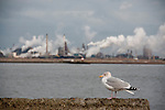 In the back you see the steel factory in Velzen in the North of the Netherlands