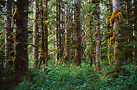 SITKA SPRUCE FOREST - GLACIER BAY NATIONAL PARK, ALASKA