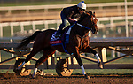 October 28, 2019 : Breeders' Cup Sprint entrant Engage, trained by Steven M. Asmussen, exercises in preparation for the Breeders' Cup World Championships at Santa Anita Park in Arcadia, California on October 28, 2019. Carolyn Simancik/Eclipse Sportswire/Breeders' Cup/CSM