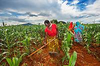AWright_Tanz_008804.tif<br /> Tanzania, Africa. Miriam Canda works with seven other farmers to manage tho split of land in Morogoro. They work collaboratively to produce corn to sell in the market.
