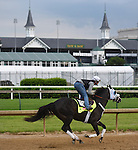 LOUISVILLE, KY - MAY 04: Tom's Ready, trained by Dallas Stewart and owned by G M B Racing, exercises and prepares during morning workouts for the Kentucky Derby and Kentucky Oaks at Churchill Downs on May 4, 2016 in Louisville, Kentucky.(Photo by Samantha Bussanch/Eclipse Sportswire/Getty Images)