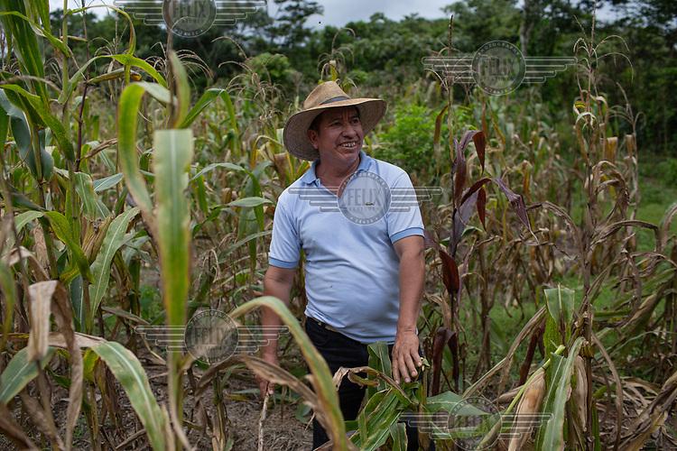 Community elder and war survivor Guadalupe Camposeco, 53, works in the corn fields in the 15 de Octubre La Trinidad community.