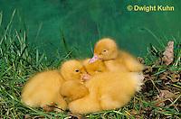 DG07-021z  Pekin Duck - huddling