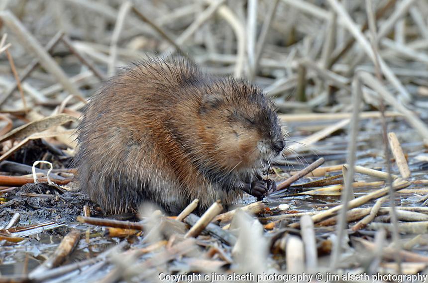 Affordable stock photos with animal photos, wildlife photos and bird photos.