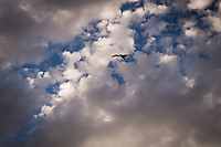 A gull flies by, its wings glowing with late afternoon light against a background of white and gray clouds and blue sky.