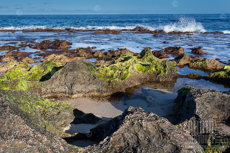Jagged rocks covered with green algae at low tide near the shoreline at Ke Iki Beach, North Shore, O'ahu.