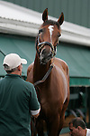 Preakness contender Mucho Macho Man gets a bath after his morning gallop on May 19, 2011, at Pimlico Race Course in Baltimore, MD. (Joan Fairman Kanes/EclipseSportswire)
