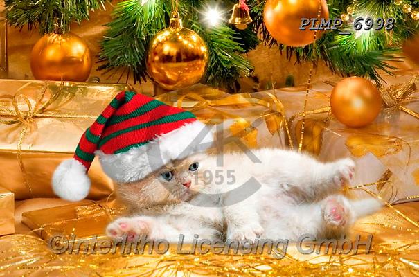 Marek, CHRISTMAS ANIMALS, WEIHNACHTEN TIERE, NAVIDAD ANIMALES, photos+++++,PLMP6998,#xa# ,kittens,cats