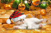 Marek, CHRISTMAS ANIMALS, WEIHNACHTEN TIERE, NAVIDAD ANIMALES, photos+++++,PLMP6998,#xa# ,kittens,cats