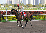 06 February 2010:  Le Grand Cru with jockey Jose Lezcano in the The Gulfstream Park Handicapp Stakes the Ninth race at Gulfstream Park in Hallandale Beach, FL.