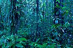 Meranti (Dipterocarpaceae) trees in lowland rainforest, Tawau Hills Park, Sabah, Borneo, Malaysia