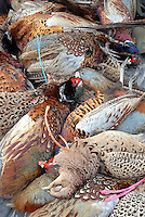 Whitewell Shoot Syndicate.....Part of the day's haul of pheasants.