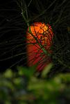 Bon Festival Orange Lantern Green Tre,Bon Festival; Morikami Center; Boca Ratone