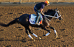 October 27, 2014: Pants On Fire exercises in preparation for the Breeders' Cup Dirt Mile at Santa Anita Race Course in Arcadia, California on October 27, 2014. John Voorhees/ESW/CSM