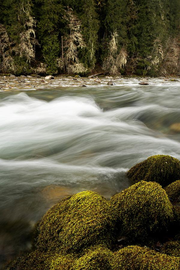 Sauk River, mossy boulders and lichen covered trees, Darrington, Snohomish County, Washington, USA