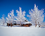 Snow laden cottonwood trees and mountain cabins in the Eastern Sierra, California