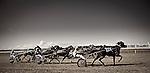 Hawera Easter Races