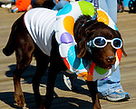"A pet parade is held annually during the ""Sea Witch festival"" at Rehoboth Beach, Delaware, USA.  © Rick Collier"