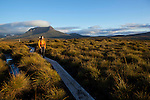 Typical Overland track landscape with walkers on duck boards to protect the humid ecosystem of button grass...paysage typique de l'overland track avec des passerelles (duck board) pour portéger les zones humides button grass (gymnoschoenus sphaerocephalus)