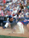 LOS ANGELES:  Mike Scioscia #14 of the Los Angeles Dodgers raises his glove to prove the tag out at home plate during a game against the Chicago Cubs at Dodger Stadium in Los Angeles, California.  Scioscia played for the Dodgers from 1980-92.  (Photo by Rich Pilling)