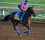 October 27, 2014:  Imperative, trained by George Papaprodromou, exercises in preparation for the Breeders' Cup Classic at Santa Anita Race Course in Arcadia, California on October 27, 2014. Scott Serio/ESW/CSM