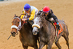 November 28, 2015:   Forever Unbridled (#9) with John Velazuez out dules Carrunmba in the Grade III Comely Stakes for 3-year old fillies, going 1 1/ mile at Belmont Park.  Trainer Dallas Stewart. Owner charles E. Fipke. Sue Kawczynski/ESW/CSM