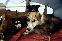 Dropped Dogs in Plane at Eagle Island Checkpoint