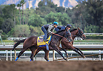 October 26, 2014: Bayern (outside) works in preparation for the Breeders' Cup Classic at Santa Anita Park in Arcadia, California on October 26, 2014. Zoe Metz/ESW/CSM