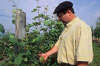 Europe/France/Aquitaine/64/Pyrénées-Atlantiques/Monein: AOC Jurançon - Charles Hours - Clos Uroulat dans ses vignes [Non destiné à un usage publicitaire - Not intended for an advertising use]<br /> PHOTO D'ARCHIVES // ARCHIVAL IMAGES<br /> FRANCE 1990