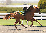 07 April 2011.  Hip #162 Hard Spun - Inny River filly, consigned by Niall Brennan.