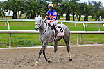 January 16, 2016:  Stageplay with Florent Geroux up on the way to the winners circle for winning  the Silverbulletday Stakes race in New Orleans Louisiana. Steve Dalmado/ESW/CSM