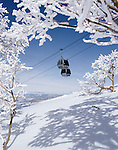 Frosted aspens and the Silver bullet gondola at the Steamboat resort.