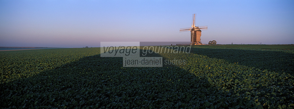Europe/France/Champagne-Ardenne /51/Marne/Valmy: le moulin de Valmy a l'aube