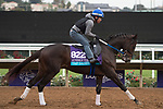 DEL MAR, CA - NOVEMBER 01: Tap Daddy, owned by Winchell Thoroughbreds LLC and trained by Steven M. Asmussen, exercises in preparation for Breeders' Cup Juvenile Turf during morning workouts at Del Mar Thoroughbred Club on November 1, 2017 in Del Mar, California. (Photo by Anna Purdy/Eclipse Sportswire/Breeders Cup)