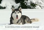 Carl, ANIMALS, wildlife, photos(SWLA2150,#A#)