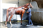 August 15, 2021, Deauville (France) - Shower for a Racehorse at the stable area at the Deauville Racecourse. [Copyright (c) Sandra Scherning/Eclipse Sportswire)]