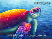 Simon, REALISTIC ANIMALS, REALISTISCHE TIERE, ANIMALES REALISTICOS, innovativ, paintings+++++RachelFroud_Turtle,GBWR319,#a#, EVERYDAY