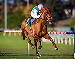 Seek Again ridden by Corey Nakatani wins the Hollywood Derby on December 01, 2013 at Betfair Hollywood Park in Inglewood, California .(Alex Evers/ Eclipse Sportswire)