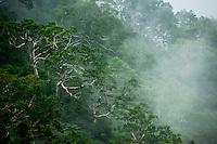 Japanese white birch thrive on the rugged slopes of the Hida Range.