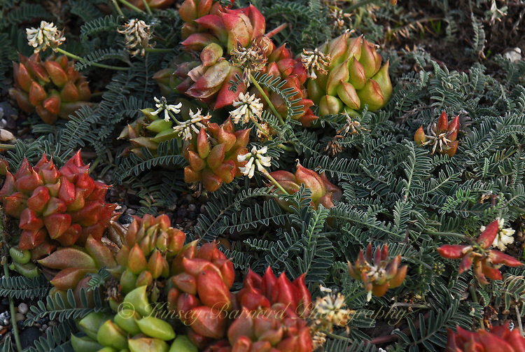 """DUNE BOUQUET""<br /> <br /> Sand dune flora in Monterey California"