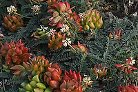 """DUNE BOUQUET""<br />