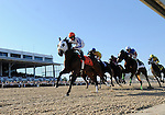 10 March 13: Diva Delite (no. 6 - black cap - middle of pack), ridden by Rosemary Homeister Jr. and trained by David Vivian, passes b y the grandstand the first time before winning the 27th running of the grade 3 Florida Oaks for three year old fillies at Tampa Bay Downs in Tampa, Florida.