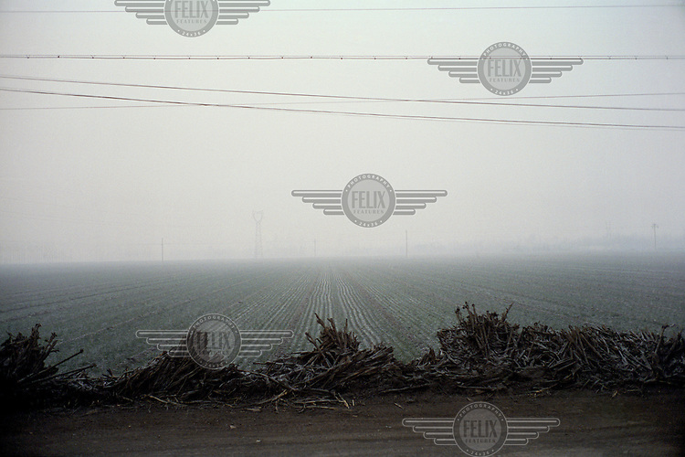 Crops growing by a dirt track near a coal-fired power plant in Linfen, one of the most polluted cities in China. The ground is covered with coal dust and fly ash from the emissions produced by nearby factories. Supplying a large part of the nation's energy, Shanxi is considered to be the centre of China's expanding coal industry.