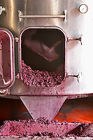 Emptying tank from skins and pips residue after fermentation. Chateau de Haux, Bordeaux, France
