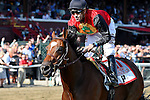 SARATOGA SPRINGS - AUGUST 27: A.P. Indian #11, ridden by Joe Bravo, wins the Priority One Jets Forego Stakes on Travers Stakes Day at Saratoga Race Course on August 27, 2016 in Saratoga Springs, New York. (Photo by Bob Mayberger/Eclipse Sportswire/Getty Images)