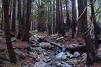 Limekiln Creek, Limekiln State Park, Big Sur, California, US