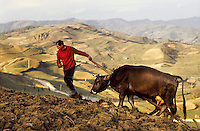 ROMANIA, Bocicoel, Maramures, October 1979..Plowing in the mist..ROUMANIE, Bocicoel, Maramures, octobre 1979..Labours dans la brume..© Andrei Pandele / EST&OST