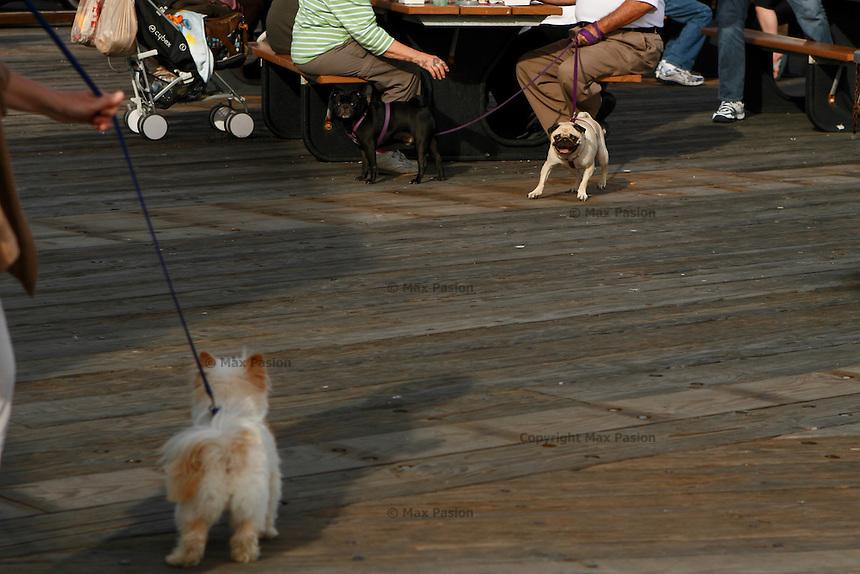 Boardwalk. Santa Barbara, CA