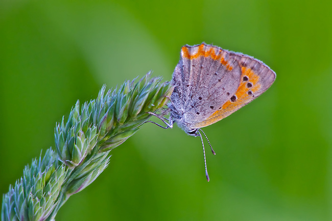 Butterfly perched precariously on the edge of a plant